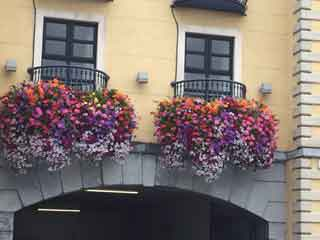window boxes of flowers