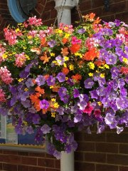 Hanging Baskets Of Flowers
