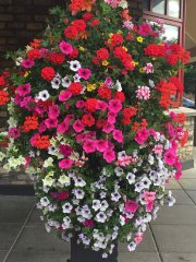 Superior Hanging Baskets And Window Boxes