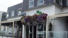Superb Hanging Baskets by Blooming Baskets Commercial Flower Growers