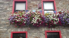 window boxes of flowers rush