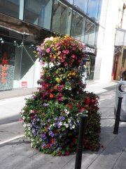 some window boxes of flowers in dublin